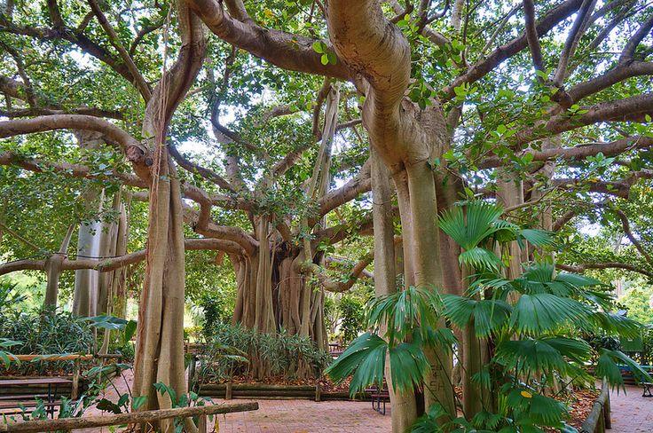 Rockhampton Botanic Garden, QLD, AU