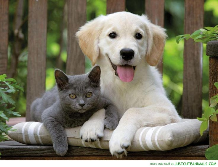 Best Dog And Cat Friends Images On Pinterest Best Friends - Dogs annoying cats with friendship