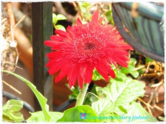 Arco Iris de Labores....Color Rojo