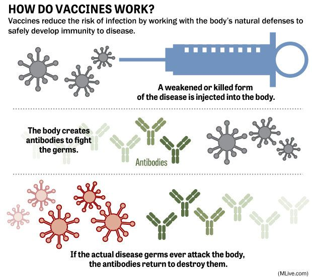 How do vaccinations work? The science of immunizations ...