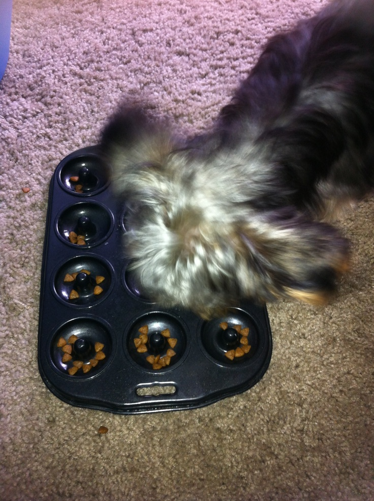 Use a mini donut pan as a dog slow feeder for dog or pet that eats way too fast!! Donut pan at Thrift Store $0.50, Dog slow feeder on Amazon $15