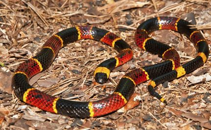It's World Snake Day: 10 Things You Didn't Know About Snakes