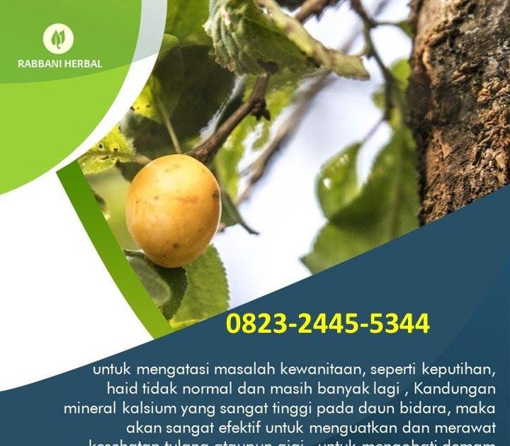 Manfaat Buah Pohon Bidara