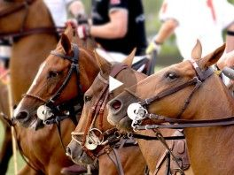 Feel the #spirit with the Engel & Völkers + Land Rover #Polo School