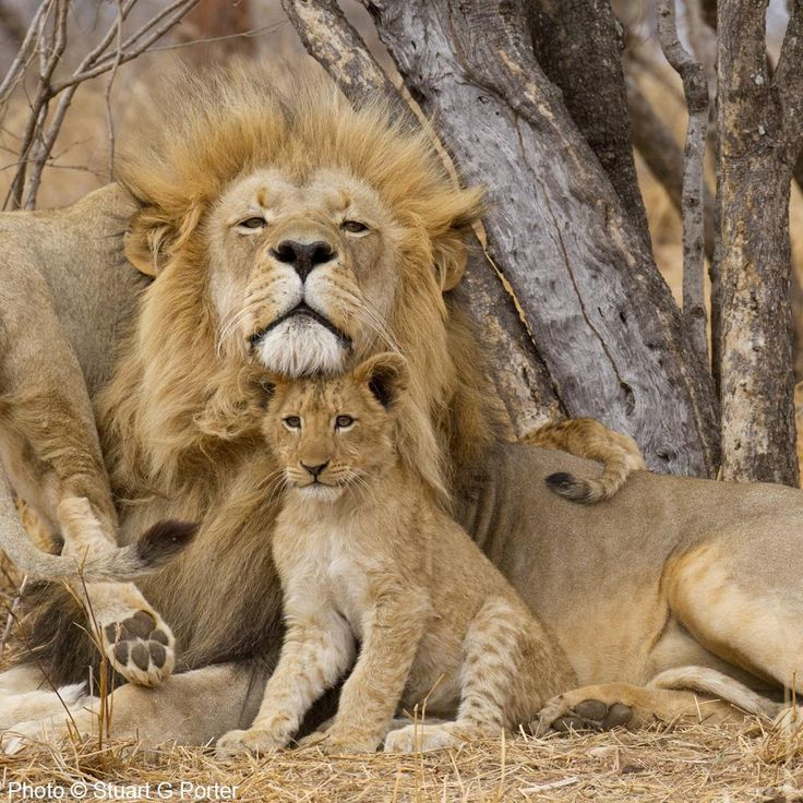 642 Best Endangered Wildlife Images On Pinterest