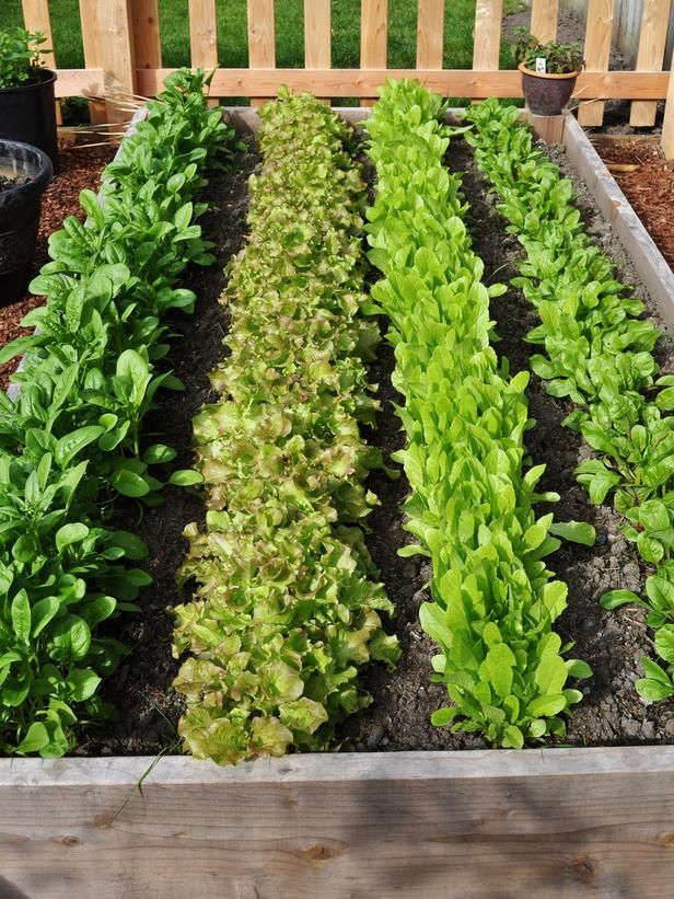 Top Ten Rules: #1 Start small. If you're beginning your first garden, help yourself avoid the feeling of being overwhelmed with weeding and general maintenance. You can grow a surprising amount of food in a bed that's 10 to 12 square feet. This beautiful raised bed of lettuces was posted by RMSer sunangel106.