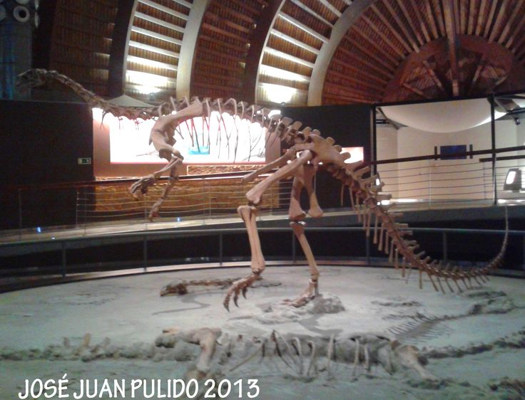 "Esqueleto de  Plateosaurus (Pterosauria).  Tal vez significa ""lagarto amplio"", es un género extinto de dinosaurio plateosáurido del Triásico, de 214 a 204 millones de años, en Europa Central, Europa del Norte y Groenlandia. Plateosaurus skeleton (Pterosauria).   Perhaps it means ""broad lizard"", is an extinct genus of dinosaur plateosáurido of the Triásico, of 214 to 204 million years, in Central Europe, North Europe and Greenland."