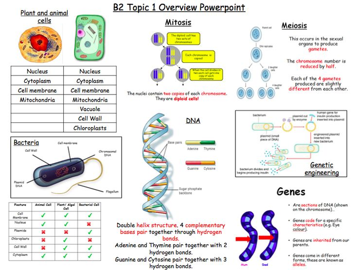 Excellent revision mats for B2.