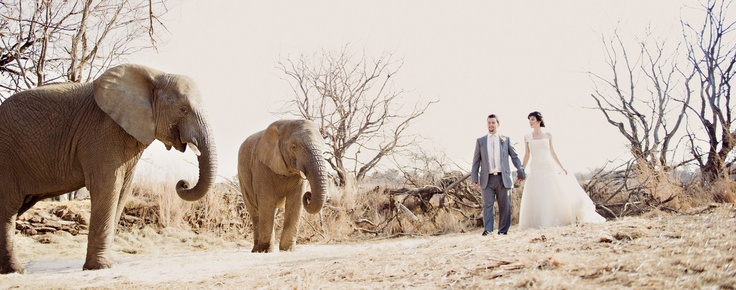 Awesome wedding photograph by Stella Uys taken at Askari Game Lodge in South Africa at this Big 5 game reserve, one hour from Johannesburg