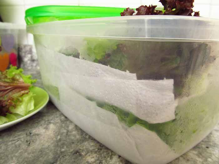 <p>Veja, como limpar, guardar e, assim, manter as folhas para a salada mais frescas e prontas para consumo por mais tempo. Além de fazer com alface – lisa, crespa, americana -, pode usar os mesmo procedimentos para espinafre, rúcula, hortelã, agrião etc. Higienizando as folhas Retire folha a folha do …</p>