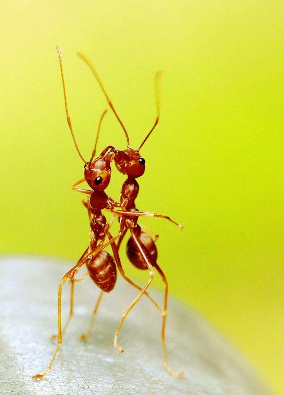 Official Pest Prevention 916-378-6244 Sacramento Roseville Elk Grove Folsom