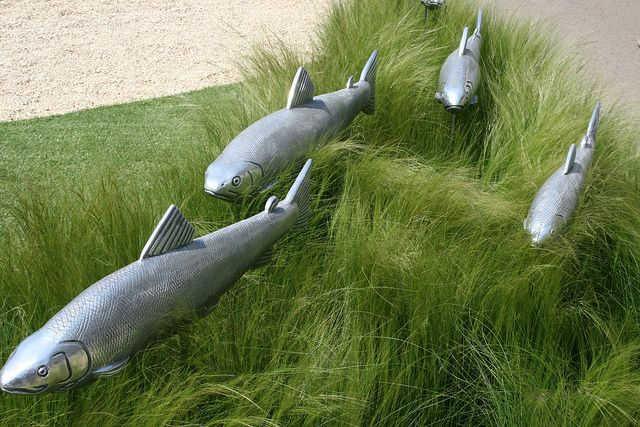 Paul Amey fish sculptures Chelsea Flower Show 2012. Bluedale grow a variety of grasses suitable for a mass planting such as this. Check out Our Selection www.bluedale.com.au/ or Buy Online www.bluedaleplant...