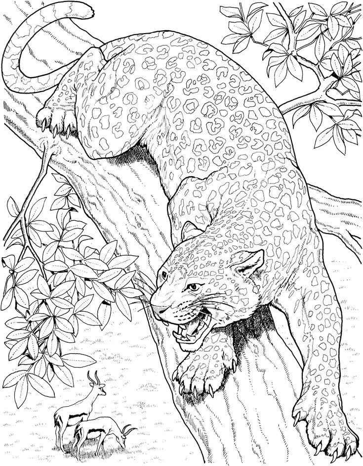 Printable Big Cat Jaguar Coloring Pages Cat Coloring Page