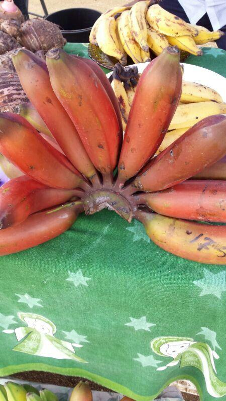 Deze rode banaantjes heten ingibakba    ingi = indiaan     bakba= banaan