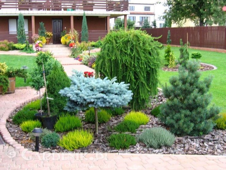 A front of house island garden bed inspiration - mostly evergreens