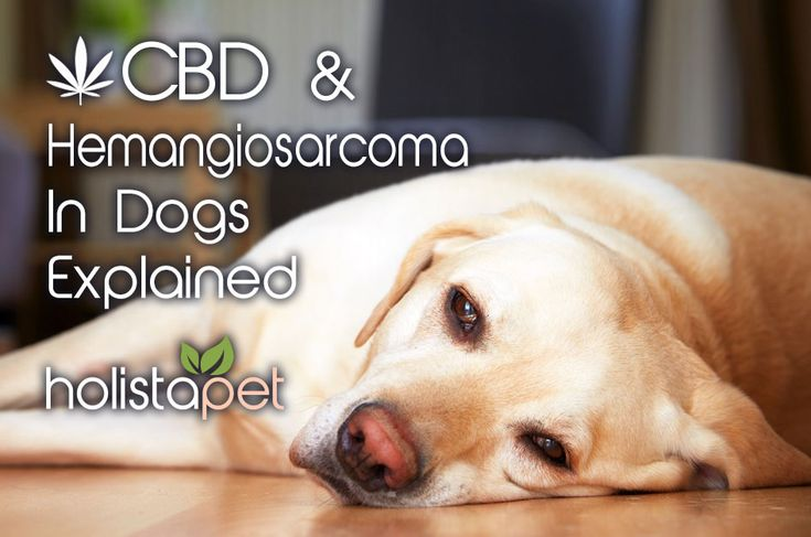 CBD has been shown to a help manage symptoms of Hemangiosarcoma in dogs as well as manage the harsh side effects of chemotherapy treatment. Read the full article here: http://bit.ly/2HmoAoG