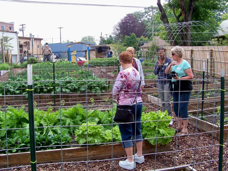 1278 best images about vegetable gardening on pinterest