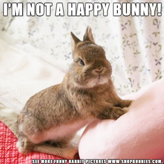 See more Cute Bunny Pics…     of our adorable fluffy little friends. We love a…
