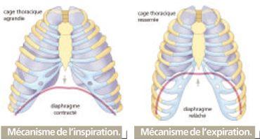 anatomie dureri de cot ajută la rănirea cotului