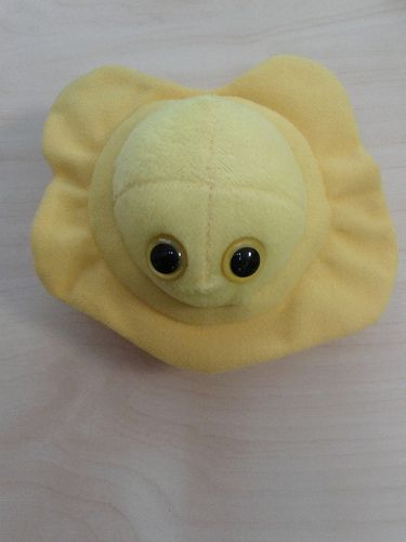 100 % pretty much everything you are likely to ever want to know on the subject of fever blisters. http://coldsorepedia.com/ Plush Herpes Microbe (Toy)
