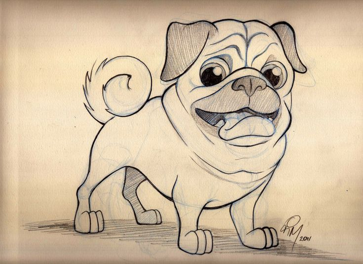 My latest Dog Caricature. This is the preliminary drawing of a Pug. I had a lot of fun drawing this little guy! I've been wanting to draw a Pug for a while! They look so cute and silly already so i...