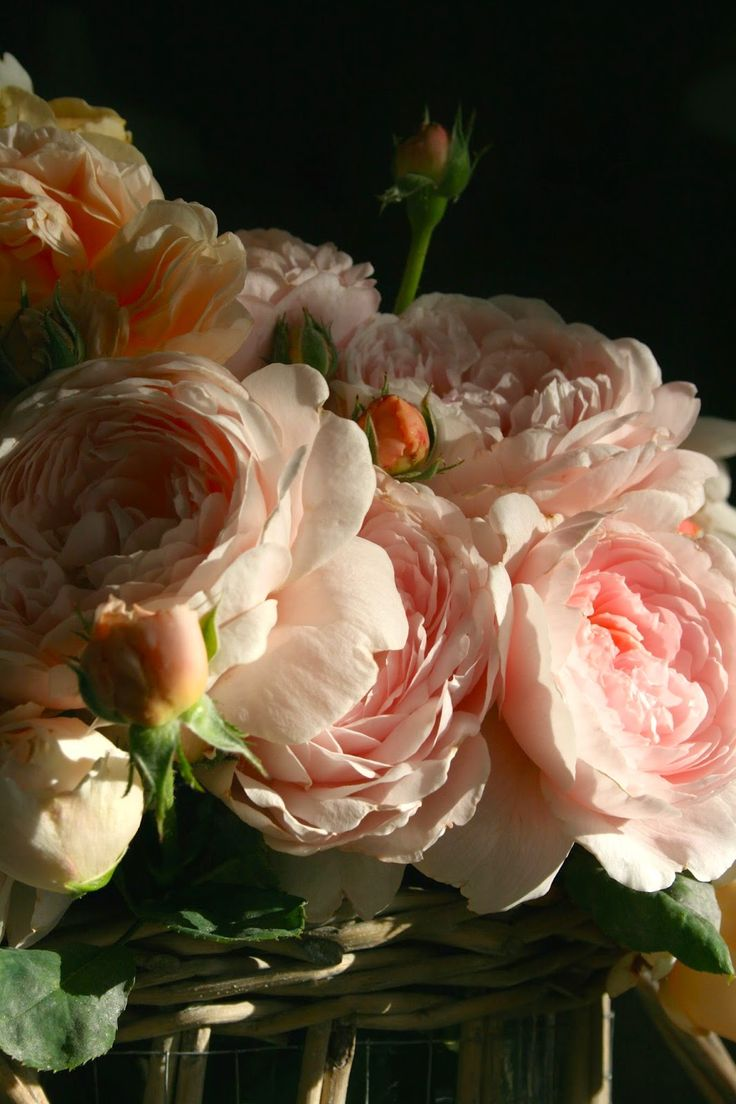 (Inspiration to draw and/or paint) the Polished Pebble: Old Fashion Romantic Roses