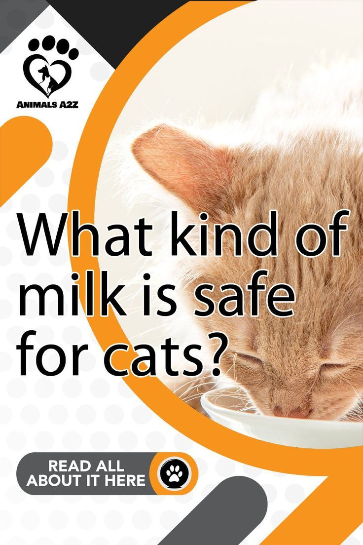 What kind of milk is safe for cats? in 2020 Best cat