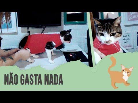 DIY: COMO FAZER ROUPA CIRÚRGICA PARA GATOS - YouTube