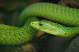 """Résultat de recherche d'images pour """"un serpent"""""""