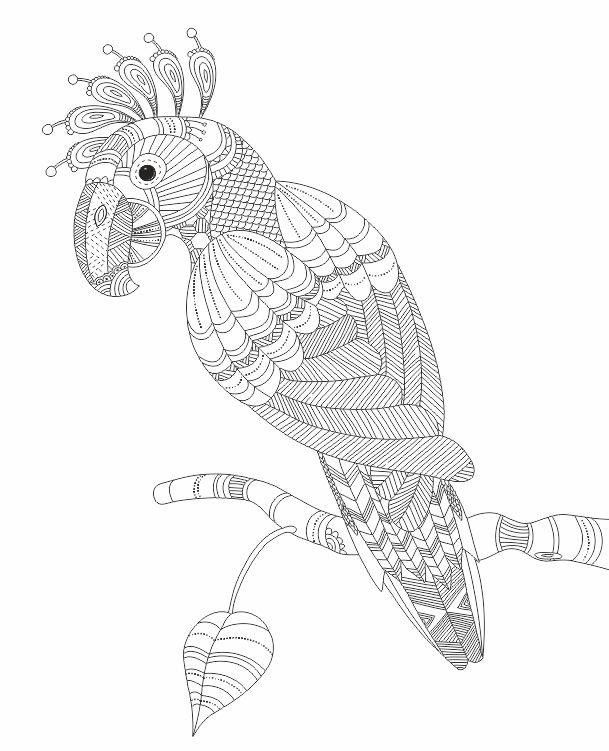 creative coloring birds art activity pages to relax and enjoy | https://www.facebook.com/relaxwithart/photos/pb ...
