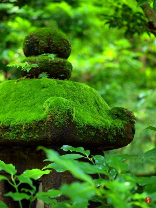 Today let's visit a cool, deep forest with a carpet of soft moss.  Breathe in the freshness and dampness and aliveness.  Green is a healing color.