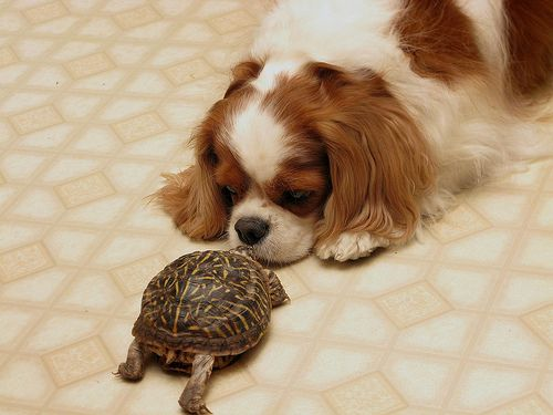 Teh puppy is kissing teh turtle :)