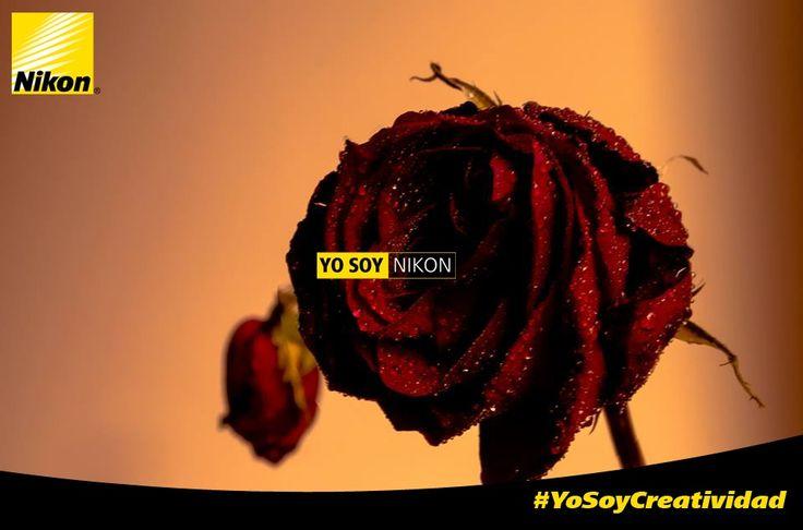 #YoSoyCreatividad Danniel Mendoza
