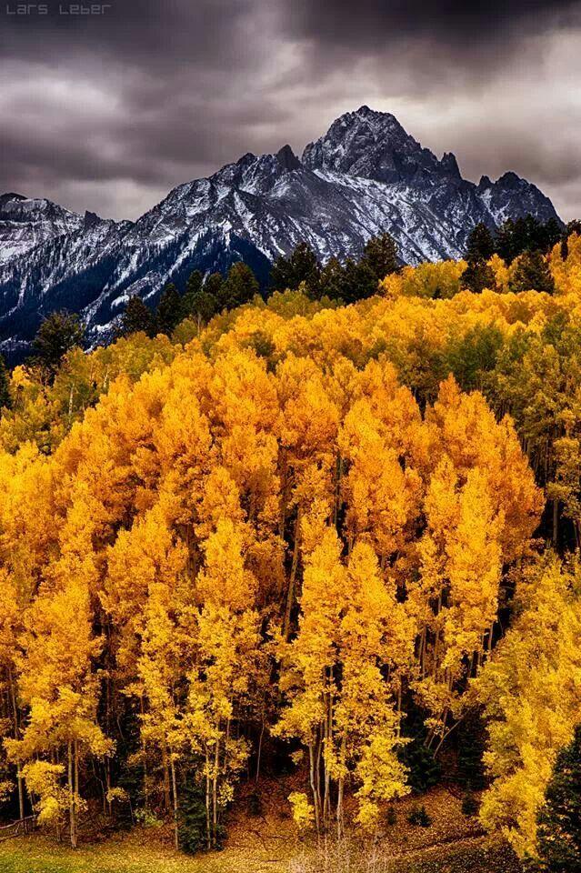 Aspen Trees near Mount Sneffels | *My Colorful Colorado ...