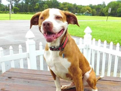 Kane - URGENT - Stark County Humane Society in Louisville, Ohio - ADOPT OR FOSTER - 4 year old Neutered Male Border Collie/Terrier Mix