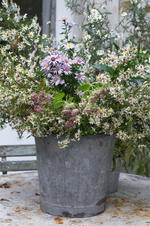 fleurs champetres