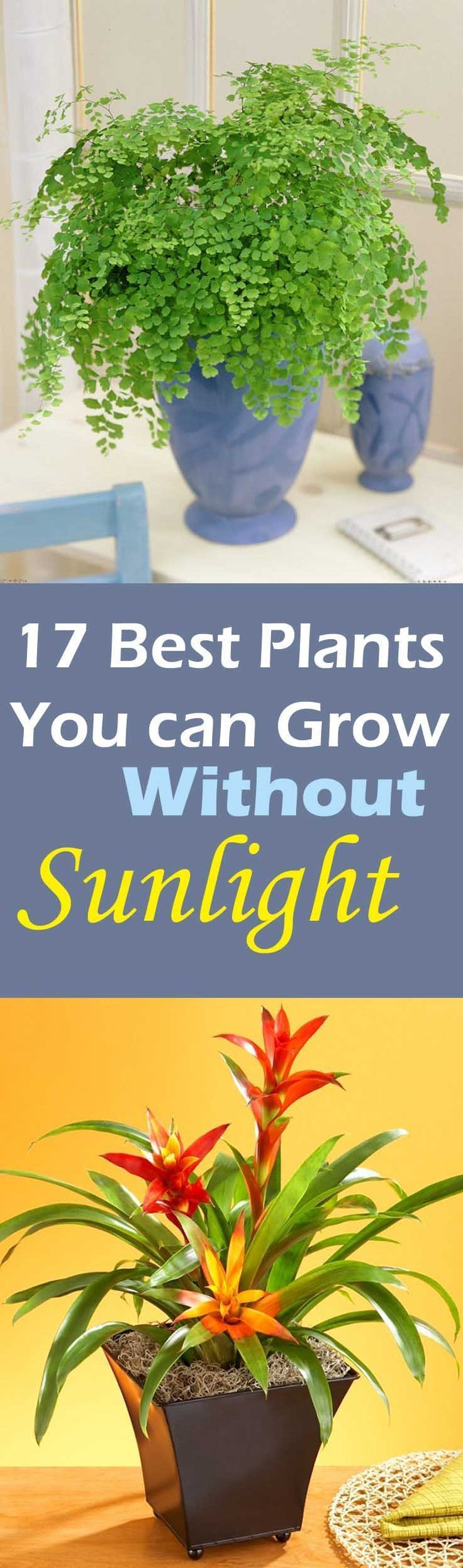 There are low light plants that grow without sunlight, they need indirect exposure, some even thrive in fluorescent light and here in this article we've listed 17 best plants to grow indoors.
