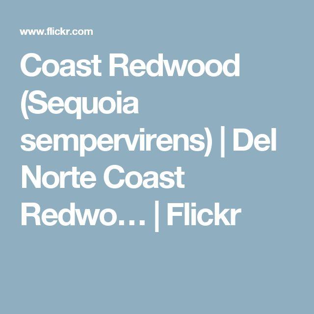 Coast Redwood (Sequoia sempervirens) | Del Norte Coast Redwo… | Flickr