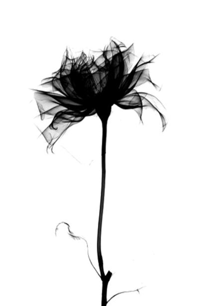 34 best black and grey xray tattoo images on pinterest tattoo ideas tattoo flowers and xray. Black Bedroom Furniture Sets. Home Design Ideas