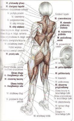 Tygryskowym okiem - ćwiczenia siłowe, domowe programy treningowe, zdrowy styl życia: Martwy ciąg - obalamy mity, rozwiewamy wątpliwości