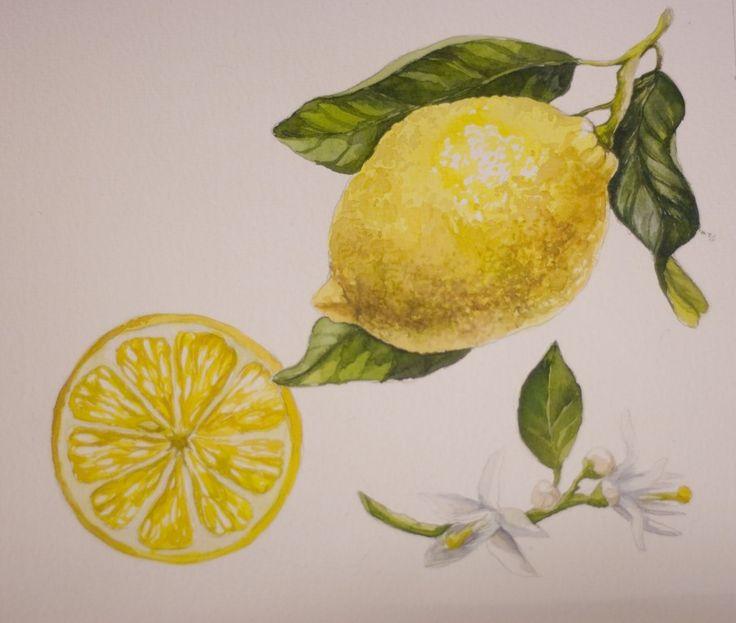 """Sketch flash mob 2017: Результаты по теме """"Лимоны"""", Nr. 150 - {иллюстрация, дизайн и другие ...котики}"""