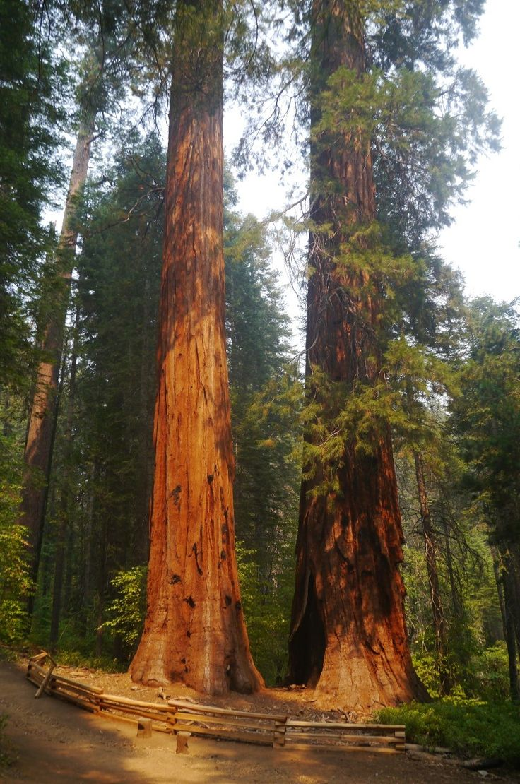 """""""une dernière balade avant de partir"""" by TravelPod blogger marco-2010 from the entry """"Yosemite national parc"""" on Thursday, September 10, 2015 in Yosemite Valley, United States"""