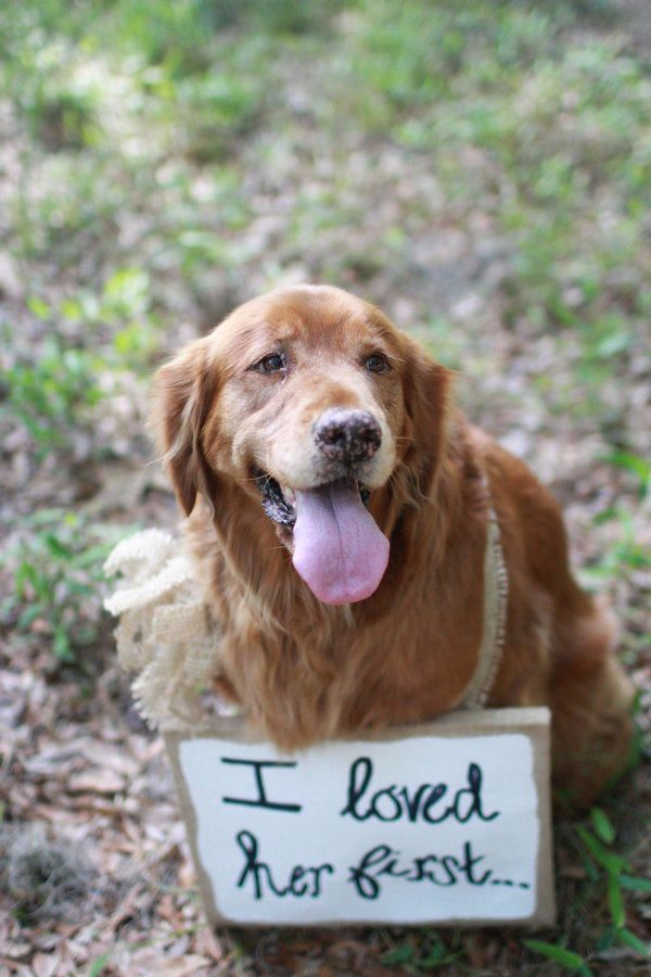 15 Adorable Ways to Include Your Dog in Your Wedding: Remind the groom who's boss