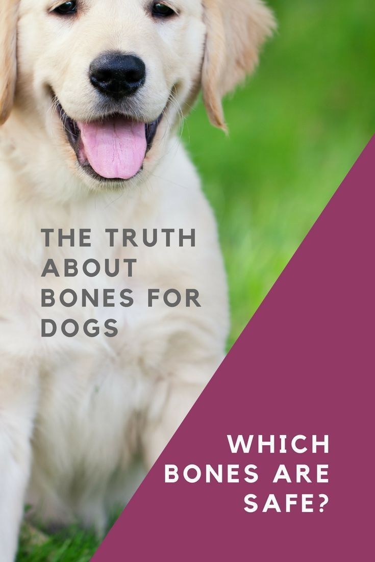 Bones For Dogs What You Really Need To Know Dogs Dog Care Dog