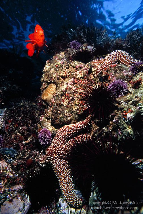 Santa cruz island channel islands national park and for Deep sea fishing santa cruz