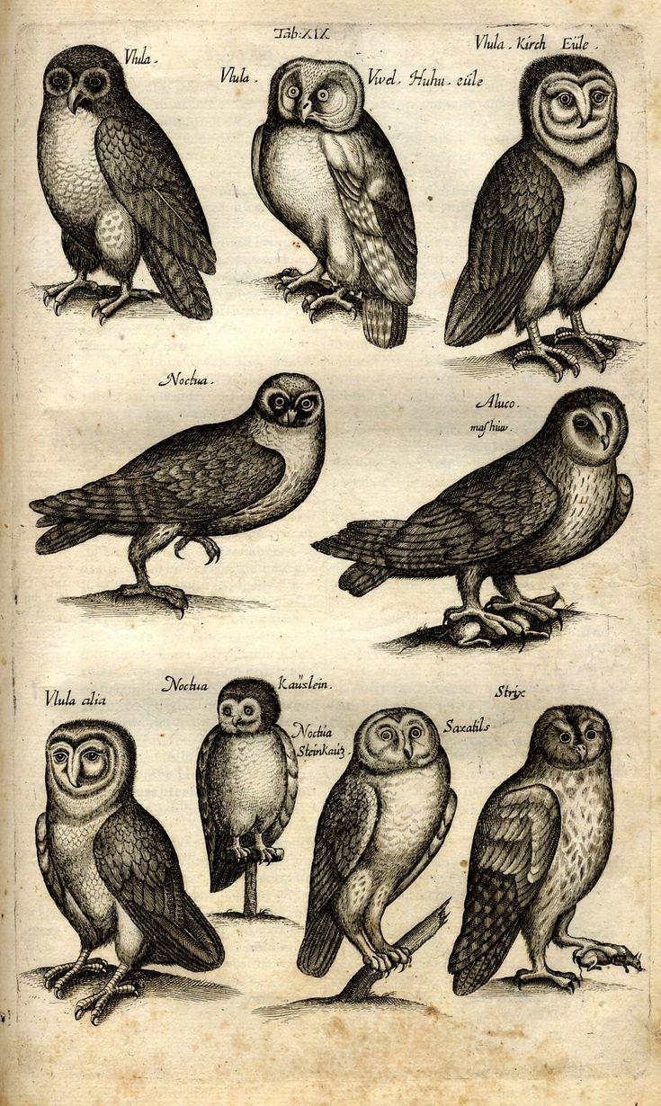 168 best Owl Prints To Frame images on Pinterest | Owl print, Owls ...
