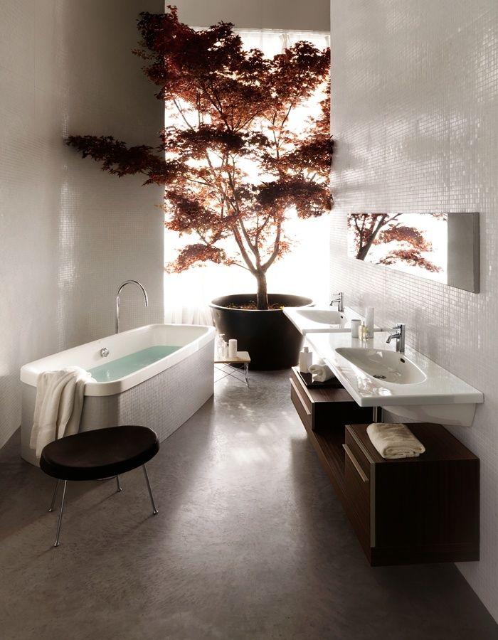 HUGE Japanese Maple in bathroom or anywhere