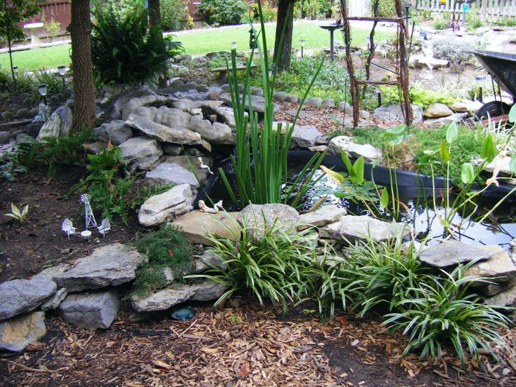 17 best images about aquarium plants on pinterest for Outdoor aquarium pond planter