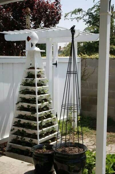 Strawberry Pyramid. I seen this in a magazine and decided to build it for my wife. I used a 4X4 post on the center and 1X4 as slats and hip boards. I have about 100 strawberry plants in it.