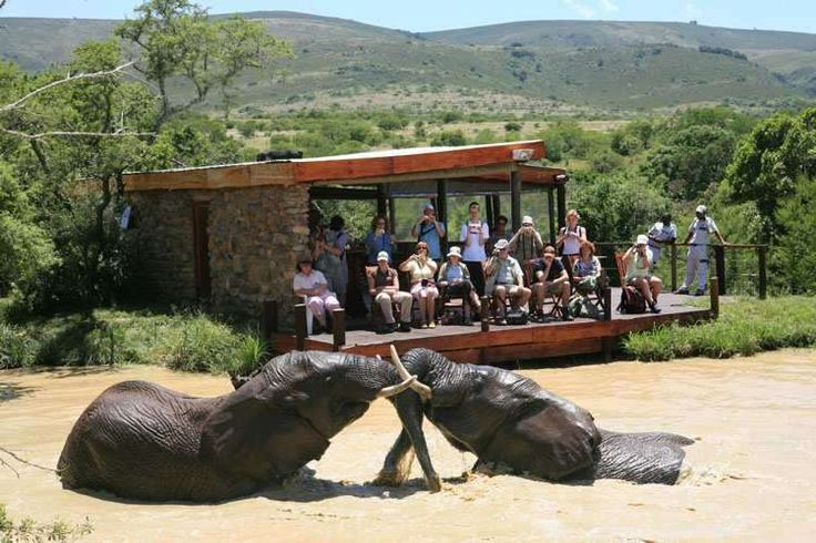 Did you know that thanks to the Greater Addo Elephant National Park, having 5 different biomes, the park is home to an abundance of different wildlife species, making it the perfect destination for a safari expedition! Have a look - https://www.afritrip.com/addo-elephant-safari-lodge/ ‪#‎Traveltuesday‬  Follow us on Pinterest :)